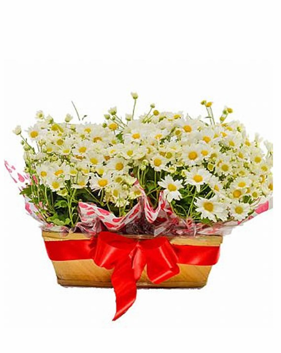Jardineira de Mini Crisantemo